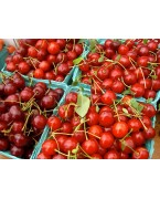 Cherry plants and cherries - Varieties